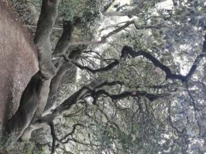 arbre forêt